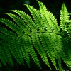 Nature leaves sunlight ferns HD wallpaper