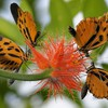 Nature insects orange flowers blurred background butterflies HD wallpaper