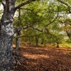 Landscapes nature trees wood branches brushwood HD wallpaper