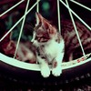 Cats kittens wheels wheel HD wallpaper