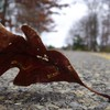 Leaves macro street HD wallpaper