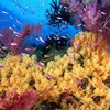 Animals coral reef HD wallpaper