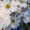 White daisy bouquet HD wallpaper