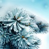 Blue frozen macro plants snow HD wallpaper