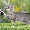 Cats animals grass british kittens HD wallpaper
