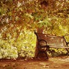 Autumn bench landscapes nature park HD wallpaper