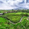 Hills rice java indonesia creek terraces terrace HD wallpaper