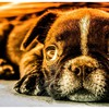 Animals dogs dreamer puppies HD wallpaper