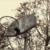 Trees basketball genetikk HD wallpaper