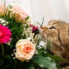 Flowers cats kittens HD wallpaper