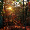Sun through a dense forest HD wallpaper