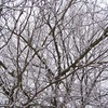 Des branches blanches  HD wallpaper