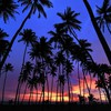 Sri lanka arbres paysages nature de palmier silhouettes  HD wallpaper