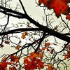 When autumn leaves fall HD wallpaper