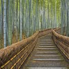 Japan nature bamboo path kyoto temple HD wallpaper