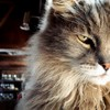 Indoors cats animals gray houses pets pet HD wallpaper