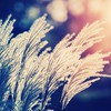 Nature bokeh sunlight depth of field reeds HD wallpaper