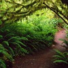 Landscapes rain forest national ferns washington HD wallpaper