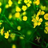 Nature flowers yellow HD wallpaper