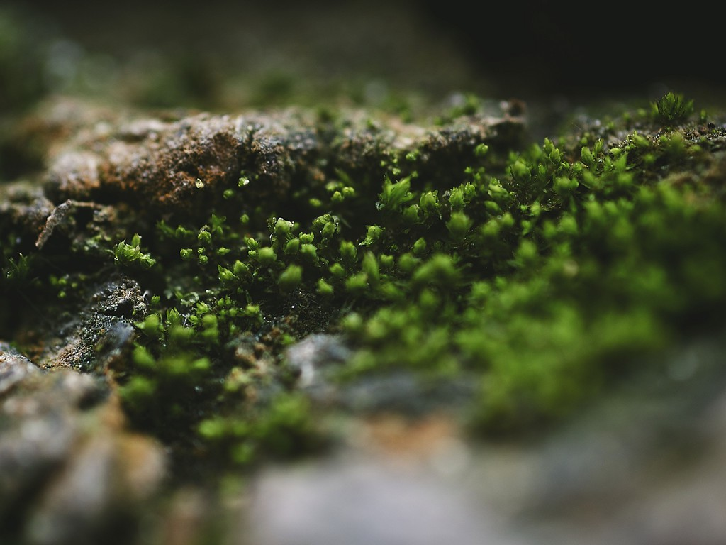An Introduction to Moss