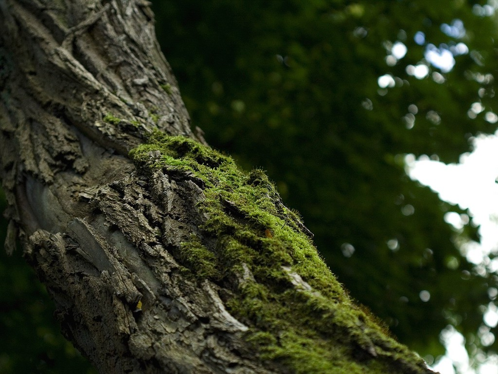depth of field nature - photo #13