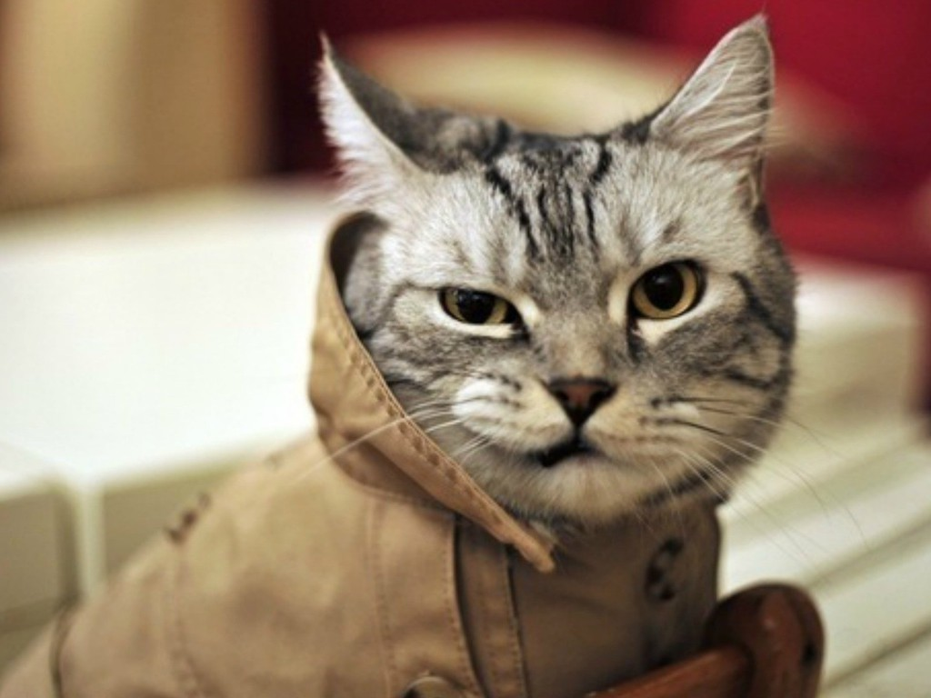 Angry Animals Google Search: Angry Animals Cats Kittens Mad Wallpaper
