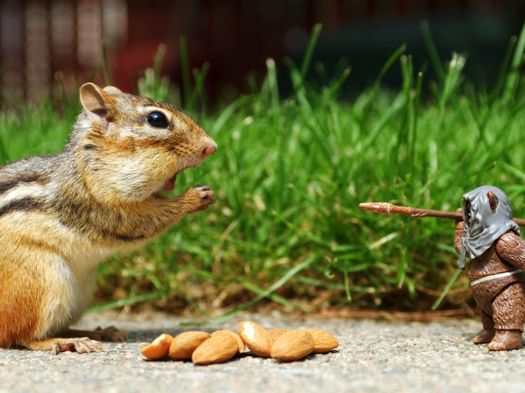 these nuts Do you know your edible nuts take this quiz to find out.
