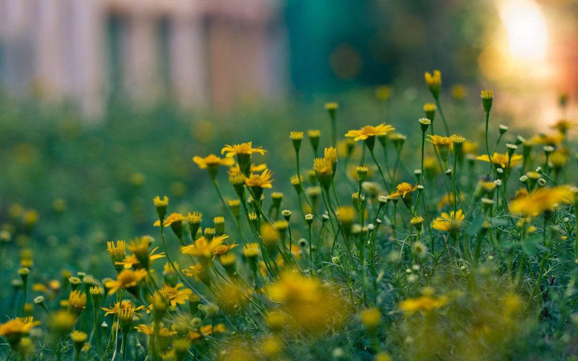 depth of field nature - photo #16