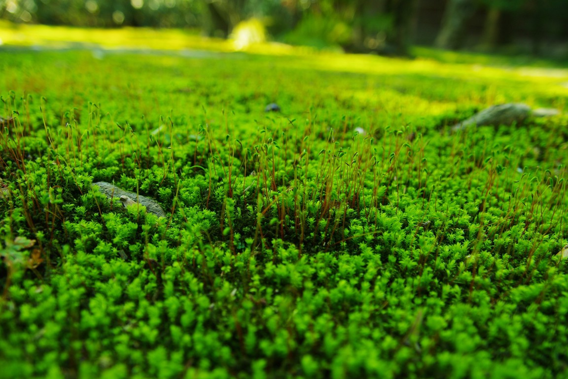 depth of field nature - photo #6