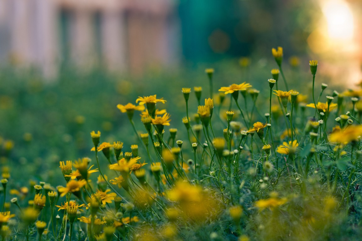 depth of field nature - photo #22