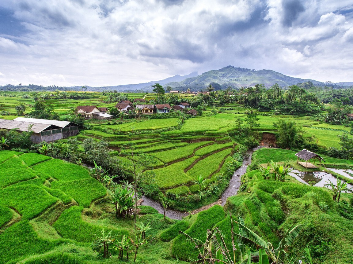 Hills rice java indonesia creek terraces terrace wallpaper for Terrace nature