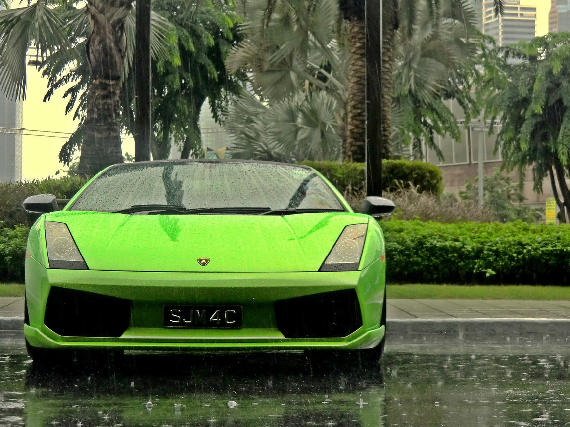 Lamborghini cars green palm trees rain wallpaper ...
