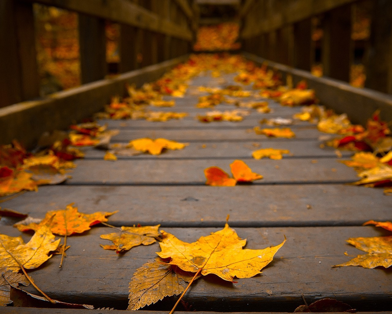 Woods Wooden Bridge Colors Peaceful View Autumn Wallpaper