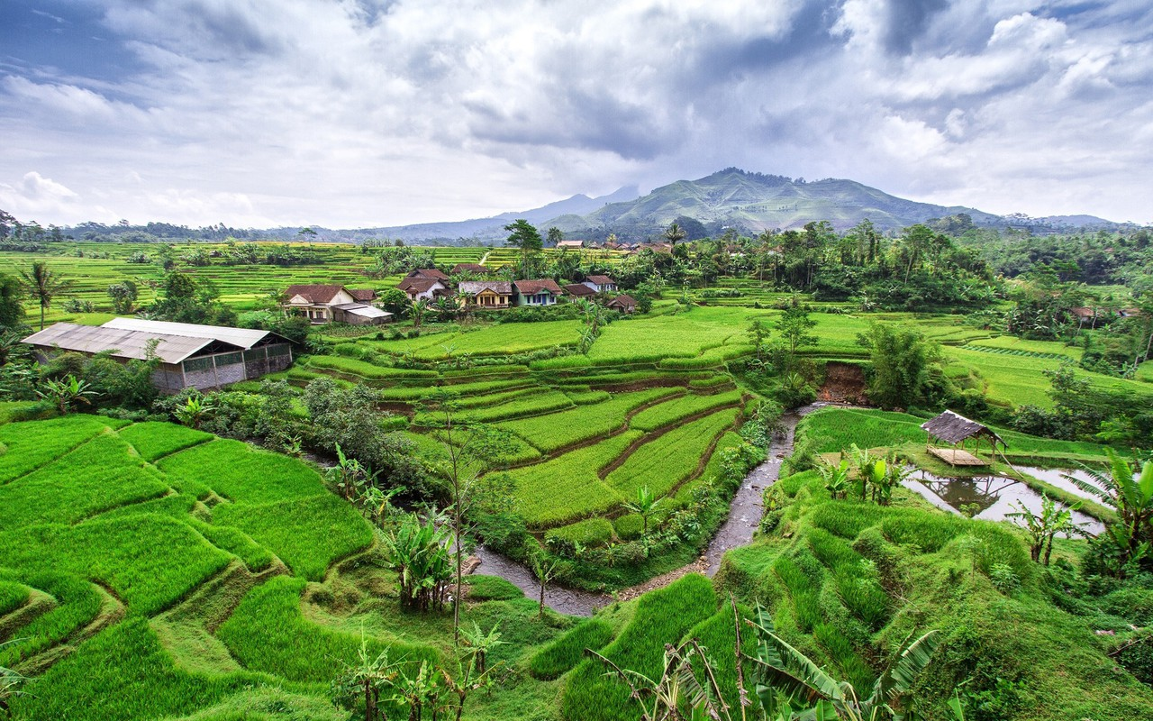 Hills rice java indonesia creek terraces terrace wallpaper for Terrace yogyakarta