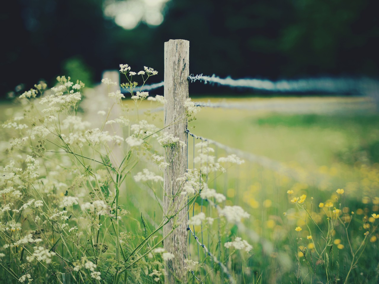 depth of field nature - photo #17