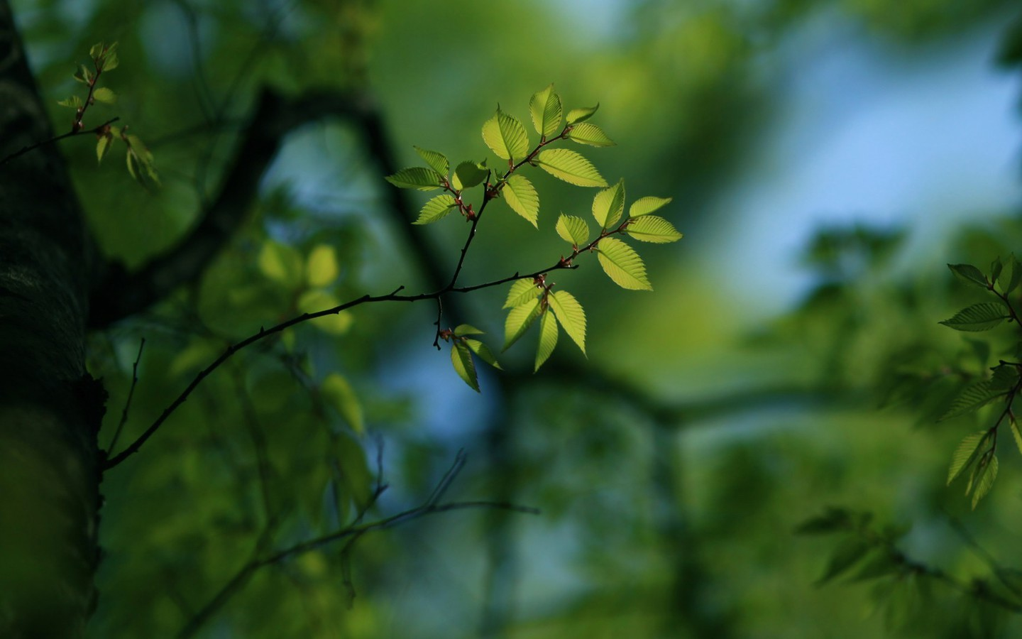 depth of field nature - photo #12