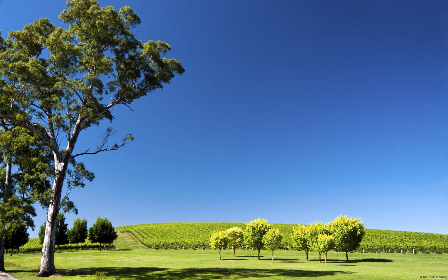 Hills landscapes nature south australia vineyard wallpaper for South australia landscape