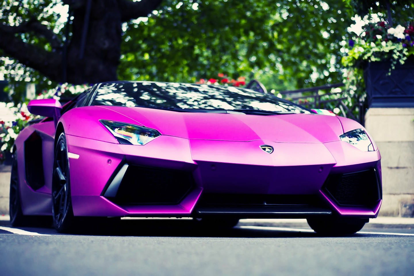 Pink Cars Lamborghini Aventador Low Angle Shot Wallpaper