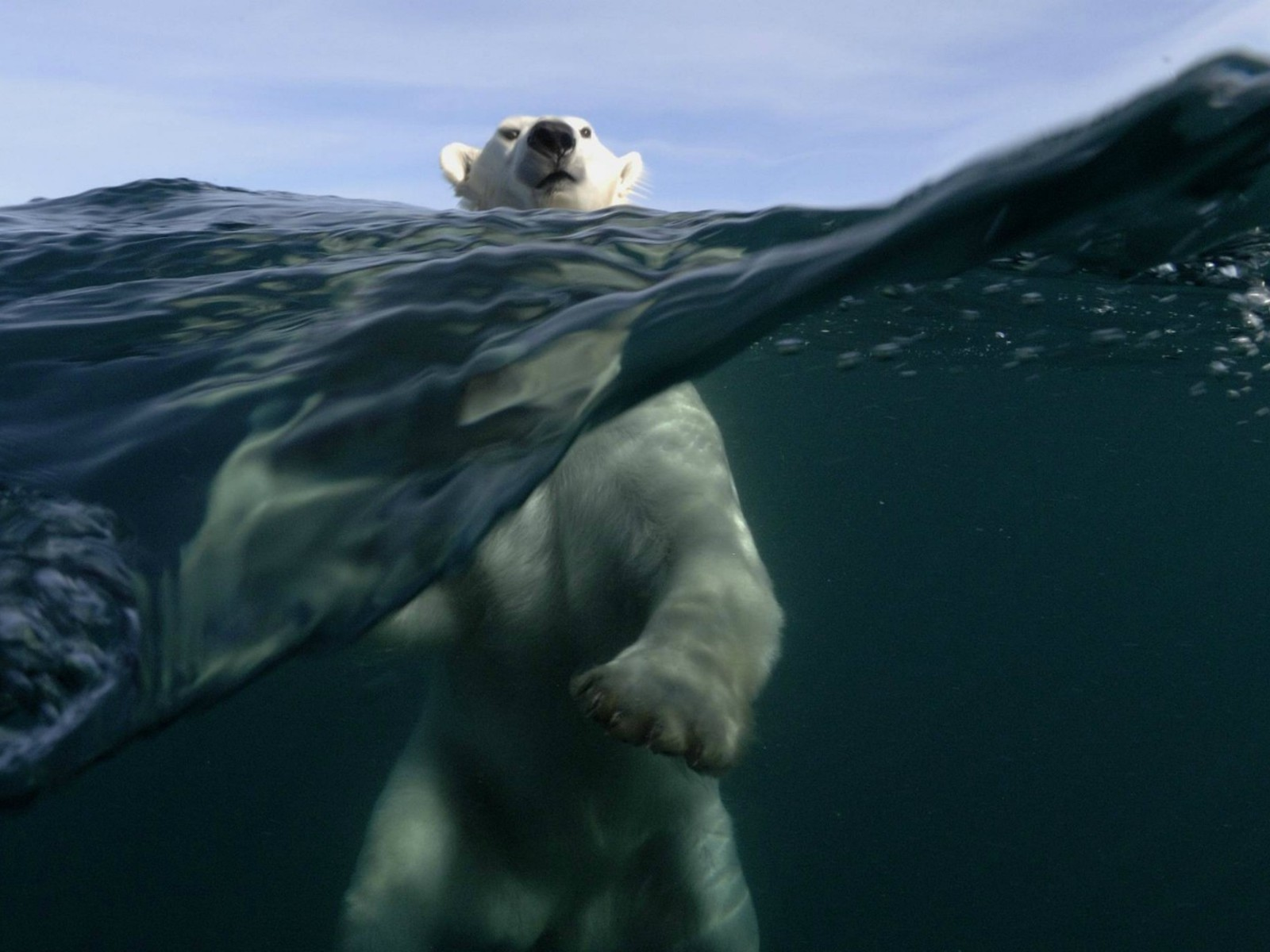 Polar Bear Pictures - Beautiful Polar Bears Photos