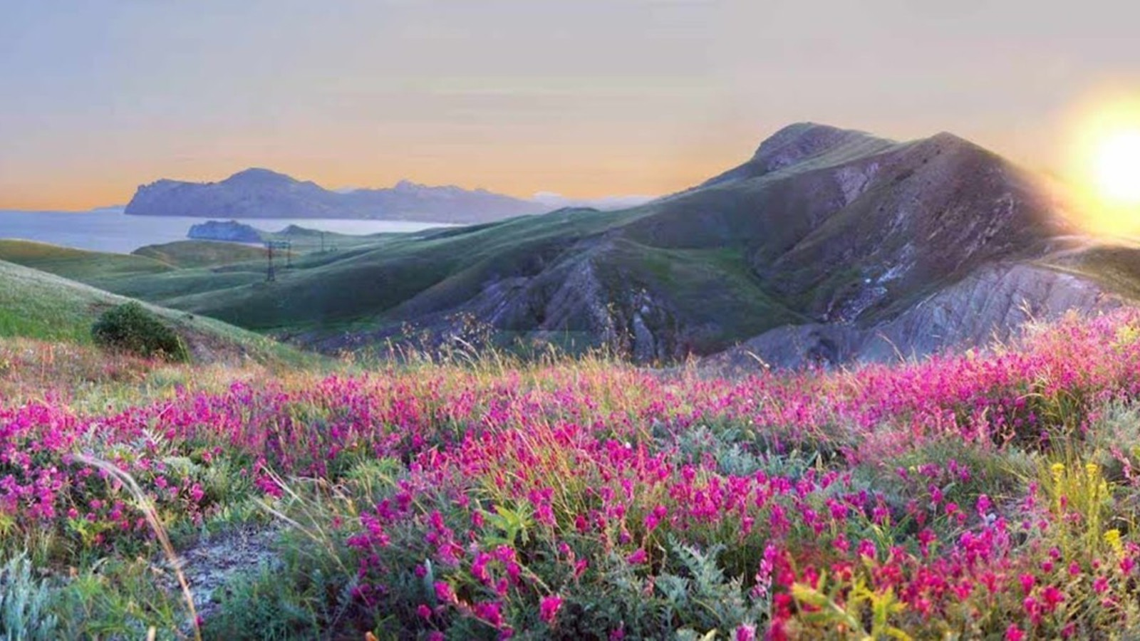 Landscapes nature flowers yellow pink grass hills ...