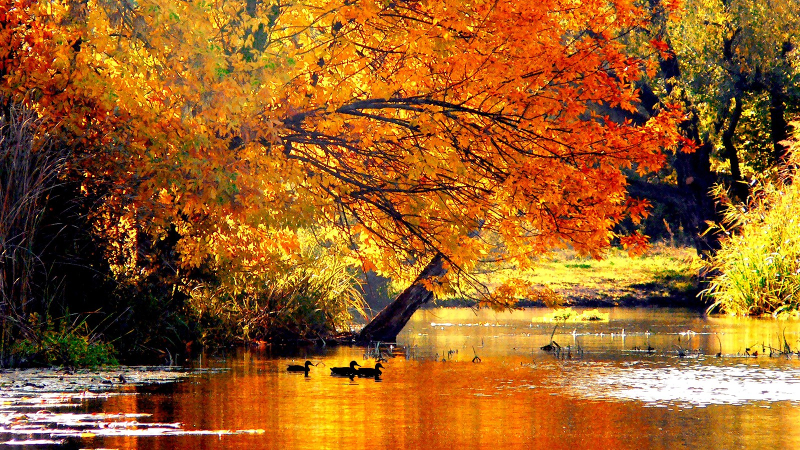 Nature Wall Murals Autumn Tale Wallpaper Allwallpaper In 14505 Pc En