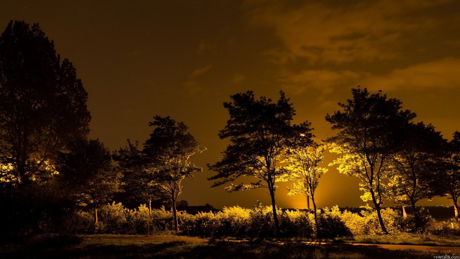 Light Nature Night Trees Wallpaper