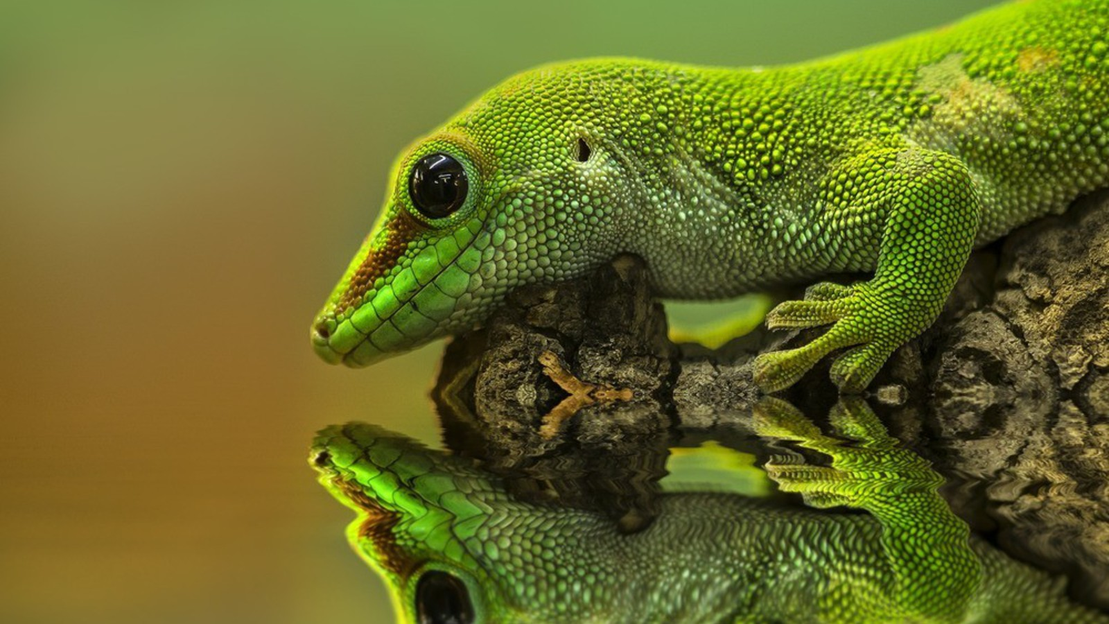22 reptile hd wallpapers - photo #10