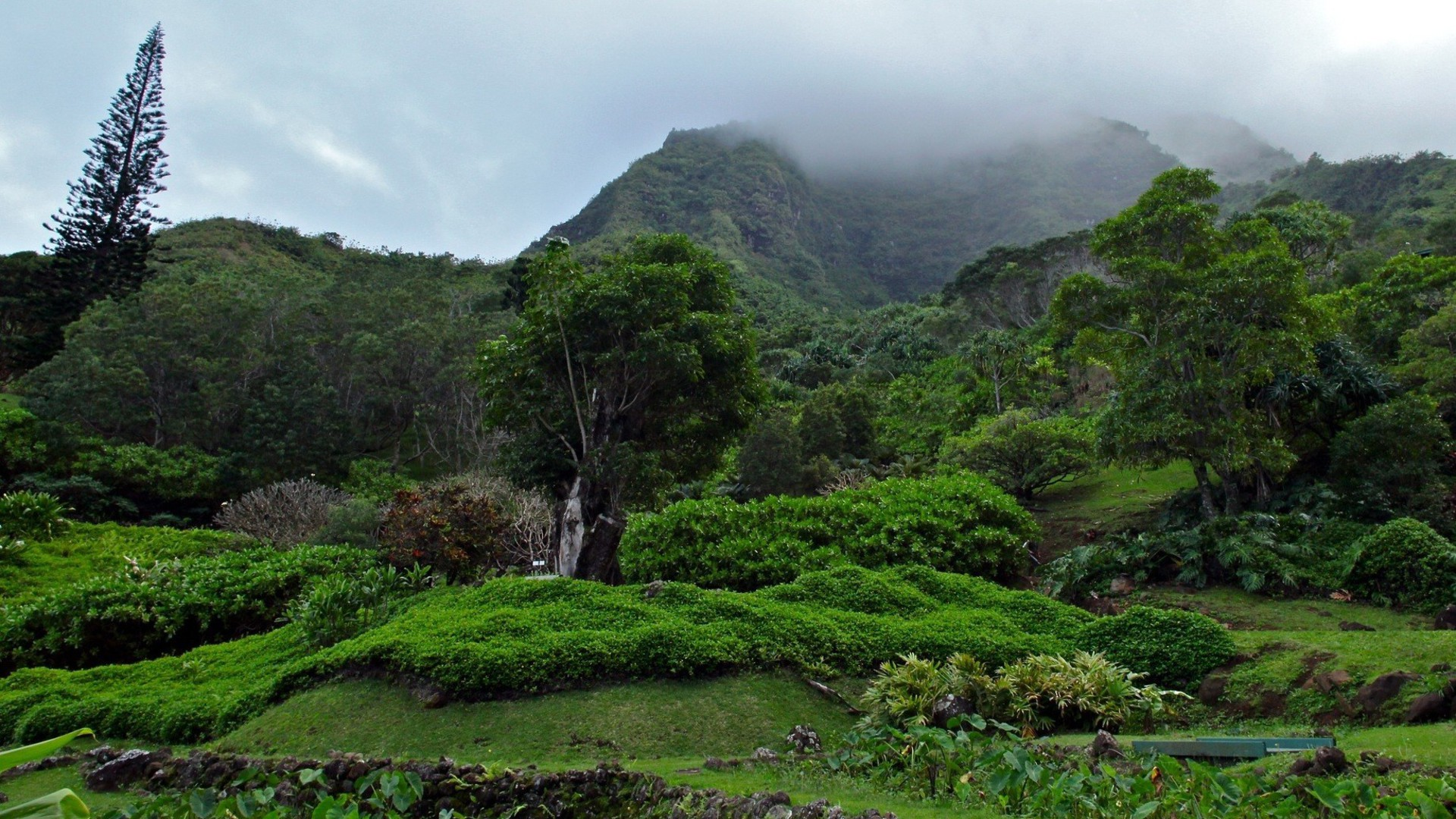 Green Mountains Landscapes Nature Trees Jungle Forest Fog
