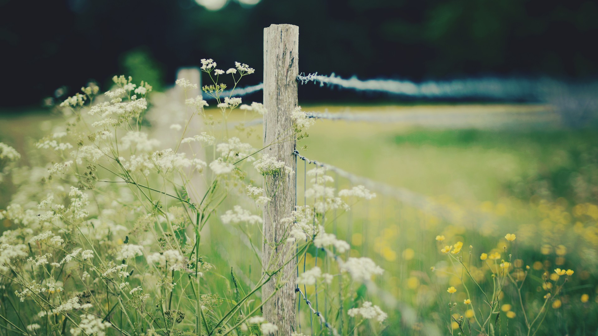 Nature White Flowers Yellow Depth Of Field Wallpaper