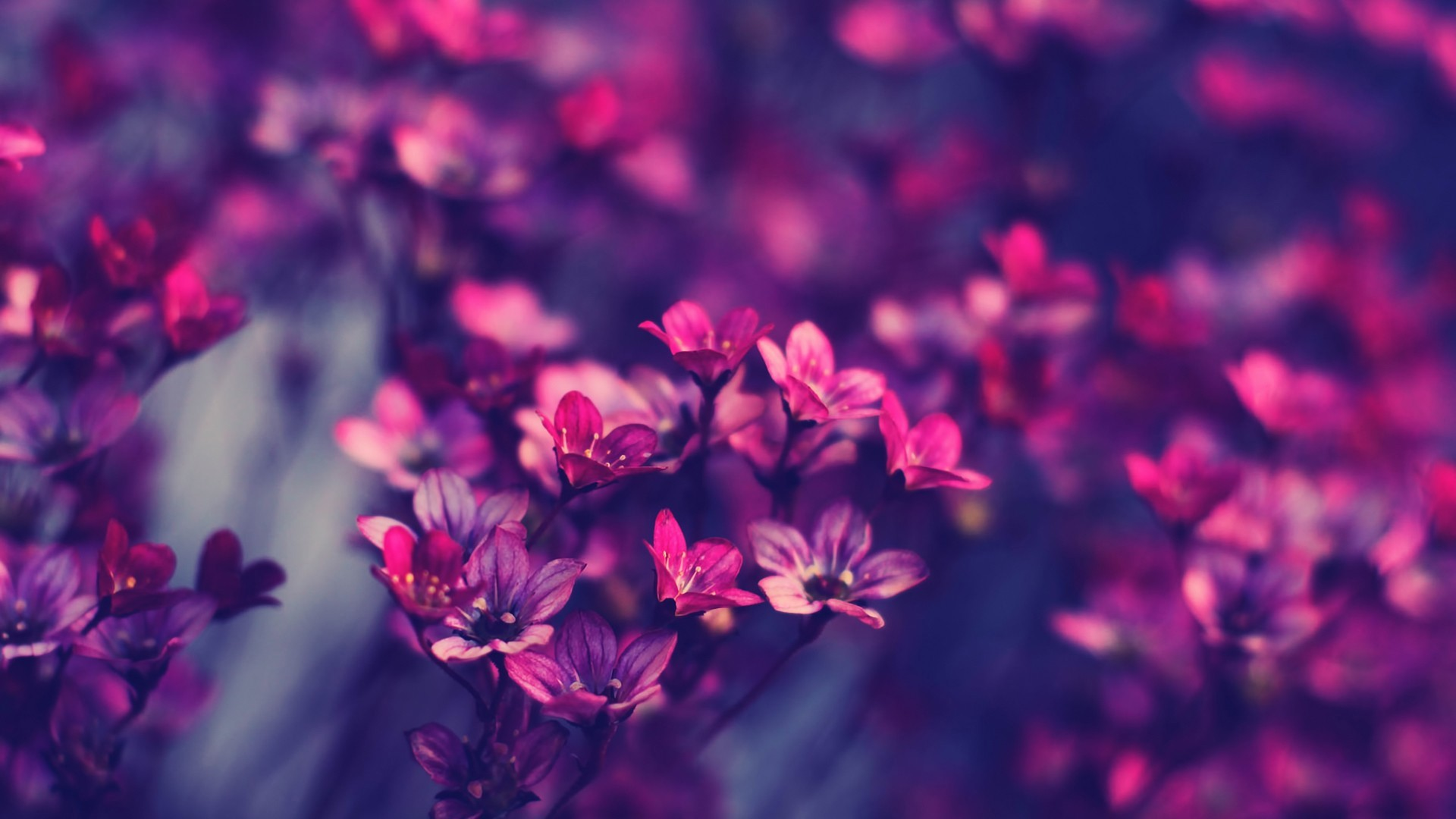 unique beautiful flowers wallpapers - photo #11