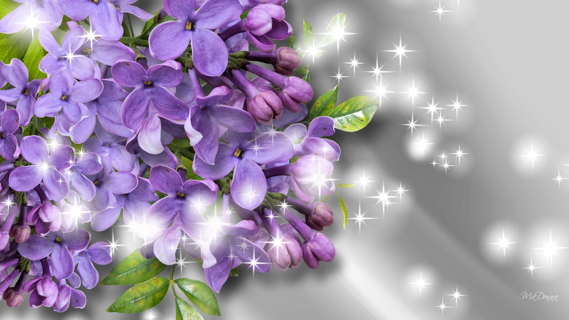 Fragrance Of The Lilacs Wallpaper