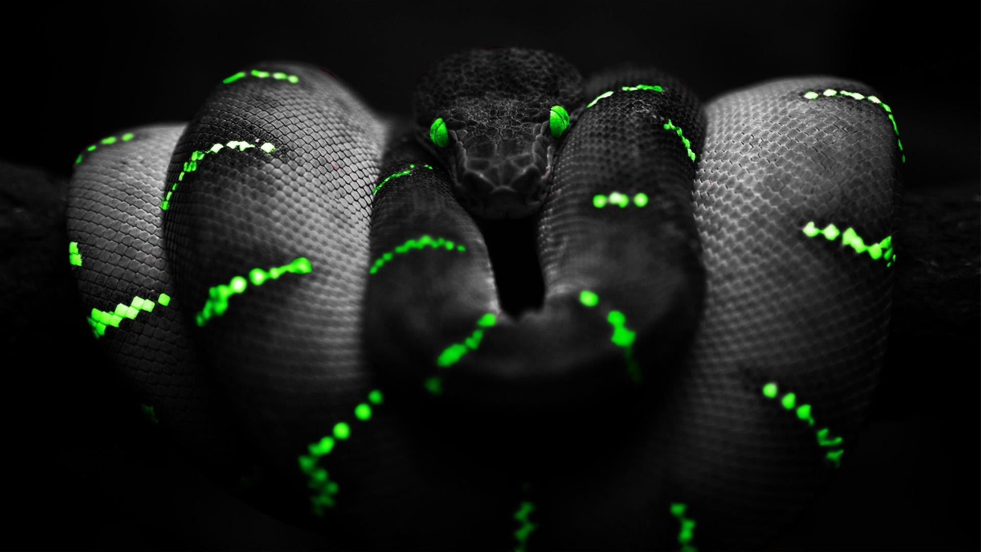 Snake Of The Dark Wallpaper