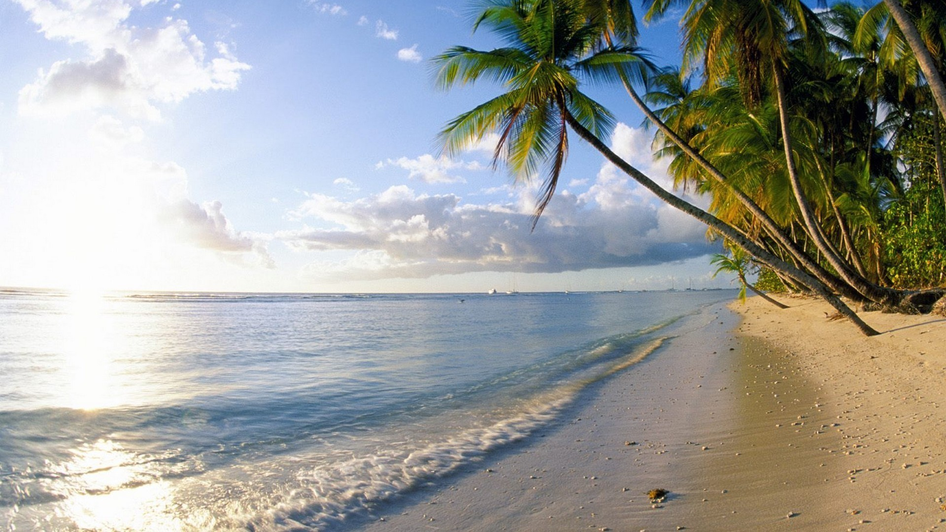 caribbean tobago beaches palm trees pigeons wallpaper | allwallpaper