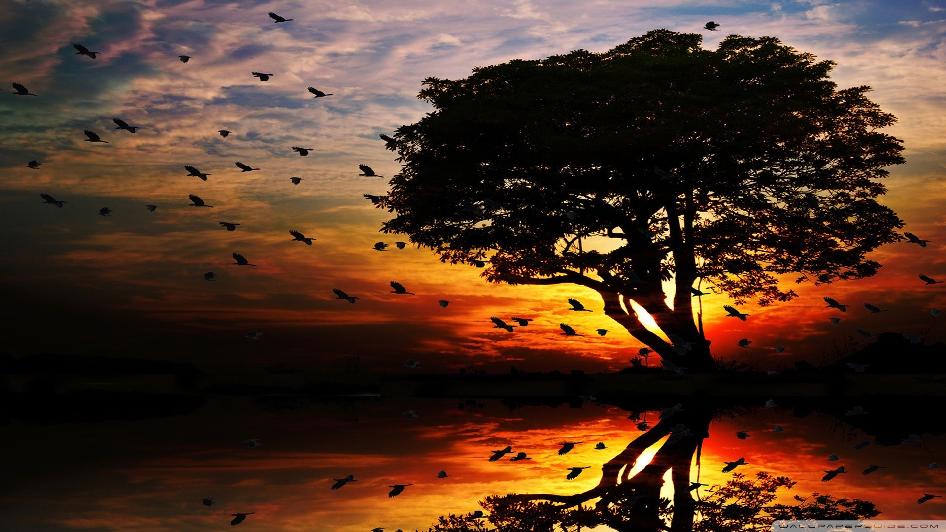 a flock of birds flying ahead the sunset wallpaper | allwallpaper.in